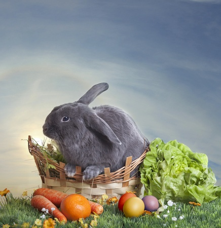 Easter bunny on a beautiful spring meadow with dandelions in front of a basket with Easter eggs  Stock Photo