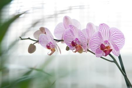 Orchideenblüte Standard-Bild - 18683159