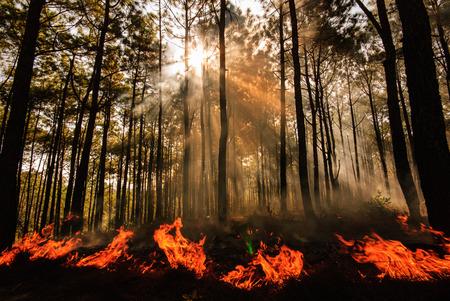 wildfire at Mae Hong sorn ,Thailand