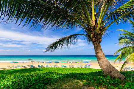 Tropical scene in Phuket,Thailand photo