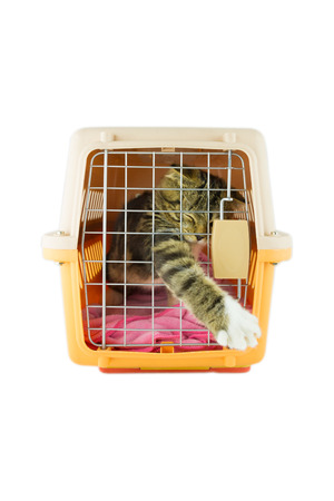 cat carrier: cat inside a cat carrier box Stock Photo