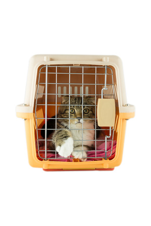 cat inside a cat carrier box photo