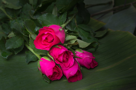 bourgeon: roses on banana leaves