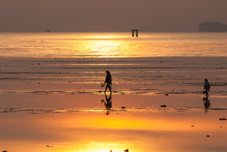 fishery find razor clam on the beach photo