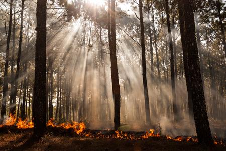 wildfire at Mae Hong sorn ,Thailand photo