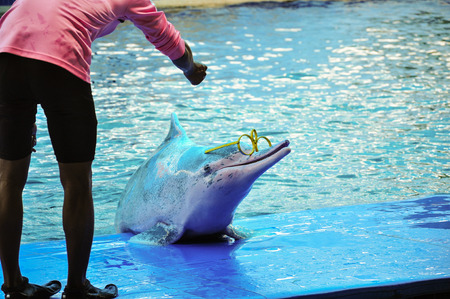 pink dolphin: Dolphins at show, Thailand