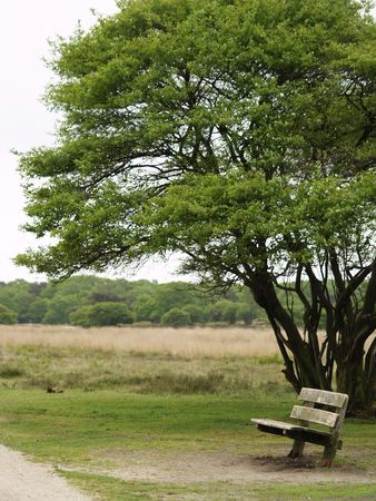 under a tree: Bench under a tree