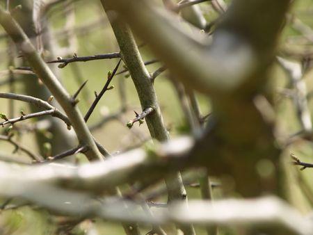 thorny: Thorny bush in close-up Stock Photo