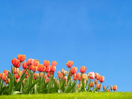 Vivid tulips with copyspace in the sky photo
