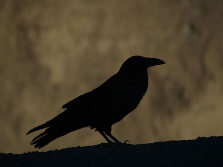 morbid: A silhouette of a big crow in Death Valley, California