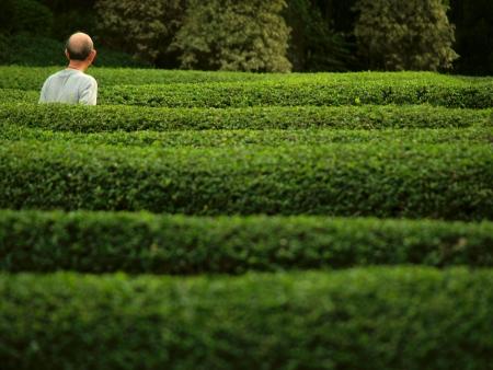An older man lost in a maze