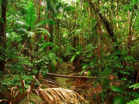 Een stroom in het midden van de jungle