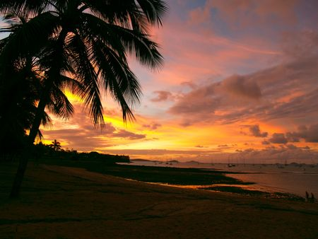Beautiful sunset with a palmtree silhouette and sailboats at Airlie Beach, Queensland Australia photo