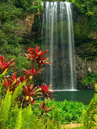 The Millaa Millaa falls in Queensland Australia Stock Photo - 3637579