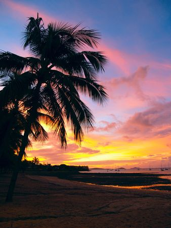 airlie: Beautiful sunset with a palmtree silhouette and sailboats at Airlie Beach, Australia Stock Photo