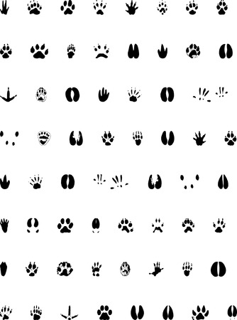 huellas de animales: Huella de recogida de animales - archivo de vectores Vectores