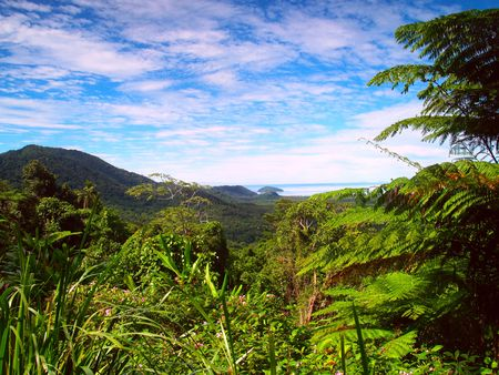 tribulation: Beautiful view over the rainforest to the ocean in Australia near Cape Tribulation Stock Photo
