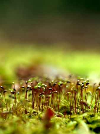 Small sprouting plants, concept for a new beginning Stock Photo - 7235546