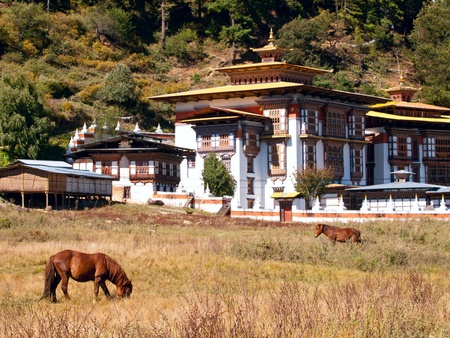 Horses walk near the Konchogsum Lhakhang monastery in Jakar in the Bumthang valley - Bhutan (focus is on the horse)