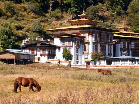Paarden lopen in de buurt van het klooster Konchogsum Lhakhang in Jakar in de Bumthang-vallei - Bhutan (focus ligt op het paard)