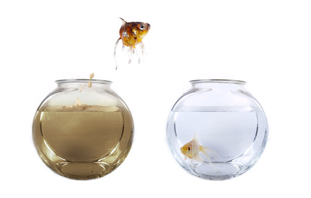 Conceptueel beeld van een vis springen uit zijn vervuild kom in een schone vissenkom Stockfoto