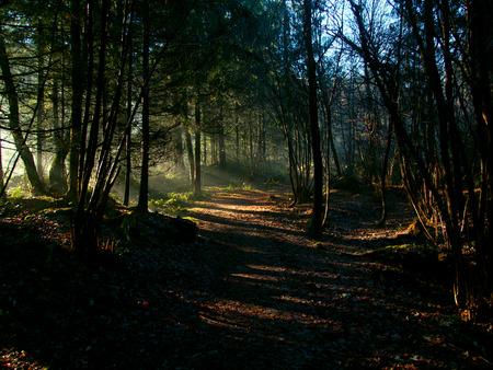 shining through: Sun shining through the trees during a cold morning