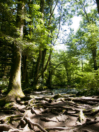jura: The forest at the waterfalls of Herison  Cascade du Herison  in Jura, France Stock Photo