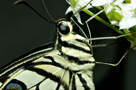 countrysides: butterfly macro Stock Photo