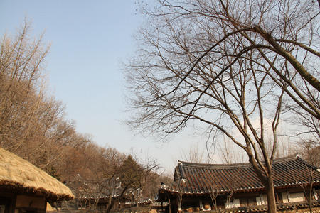 dried up: Winter Dried Up Trees Among Village Backdrop