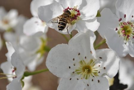 recolectar: Re�na miel
