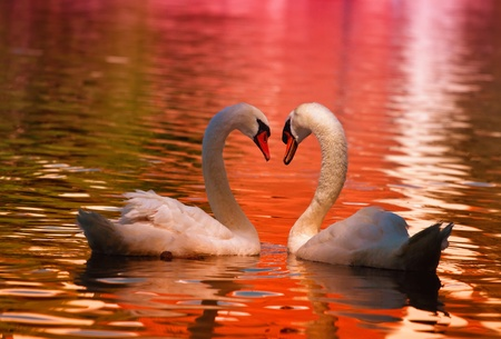 love birds: Sign of Love