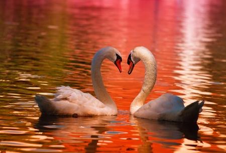 aves: Sinal de Amor Banco de Imagens