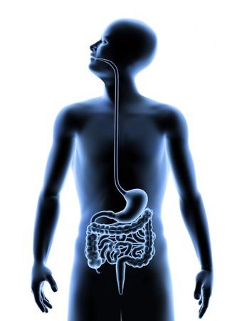 Immagine 3D del sistema digerente umano all'interno del corpo umano. Archivio Fotografico - 9827485