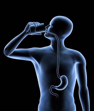 esofago: El cuerpo humano - est�mago