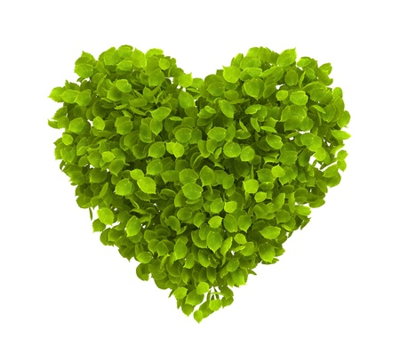 Green leaves heart shape isolated on white - ecology concept image