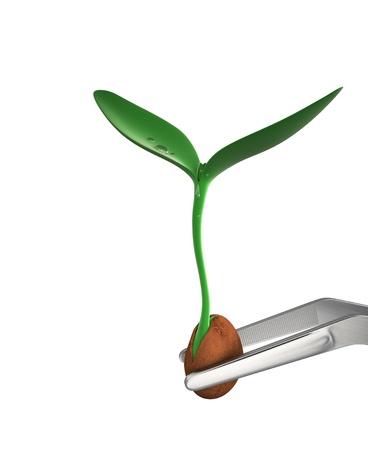 pinzas: Pinzas celebración planta joven - imagen del concepto, con trazados de recorte. Foto de archivo