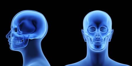 The Human Body - Skull Stock Photo - 16482297