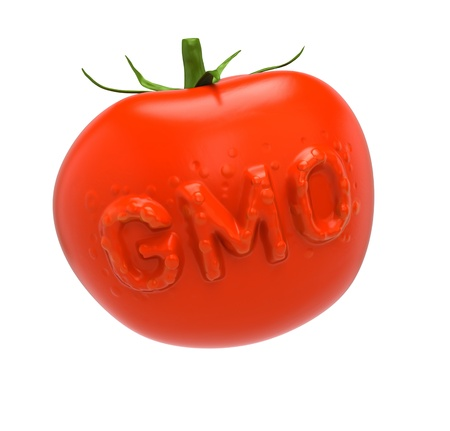 genetically modified: GMO-tomato  Genetically modified food concept