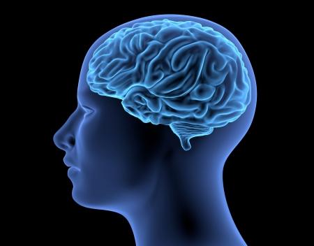 Il Corpo Umano - Cervello Archivio Fotografico - 21742442