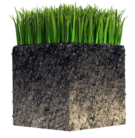 Green Grass and Soil isolated photo
