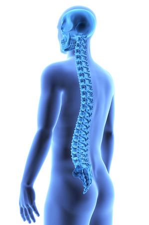 The Human Body - Spine. X-ray effect