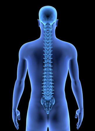 The Human Body - Spine. X-ray effect. 3D render