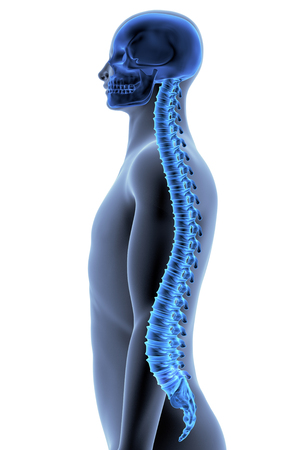The Human Body - Spine. Side View. X-ray Effect Stock Photo
