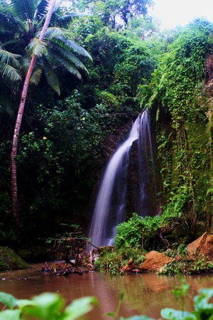 Serene jungle pool with soft flowing waterfall Imagens