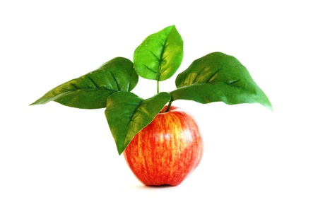 Red apple with large leaves on stem Imagens