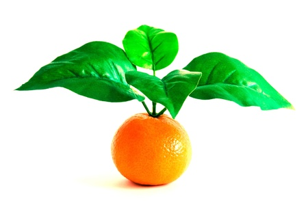 mandarins: Clementine Orange with four leaves on white background