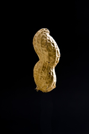 Isolated closeup of peanut in shell on black background