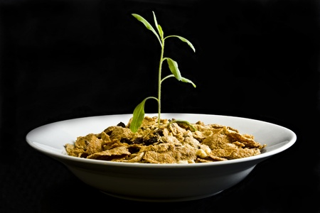 Small plant growing from cereal in bowl on black background