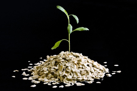 Small plant growing from a pile of dry oatmeal on black background