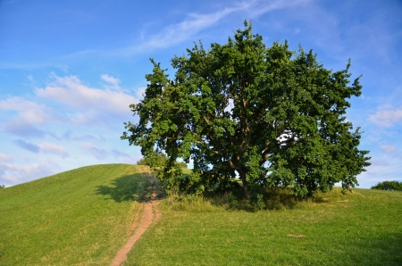 Tree on a hilltop, olympiapark germany
